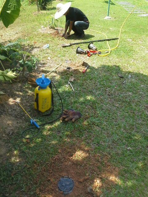 Memasang Nemesis Termite Baiting System