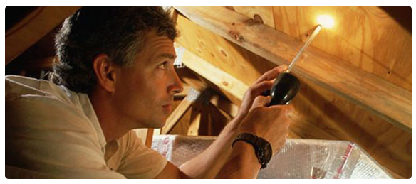termite-inspection-cavity-roof1