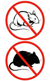 Tikus Comel Tetapi Mampu Membawa Maut